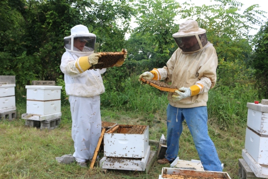 Sanders and Priddy tend one of their hives.